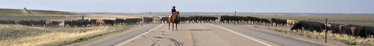 Wyoming Cattle Drive